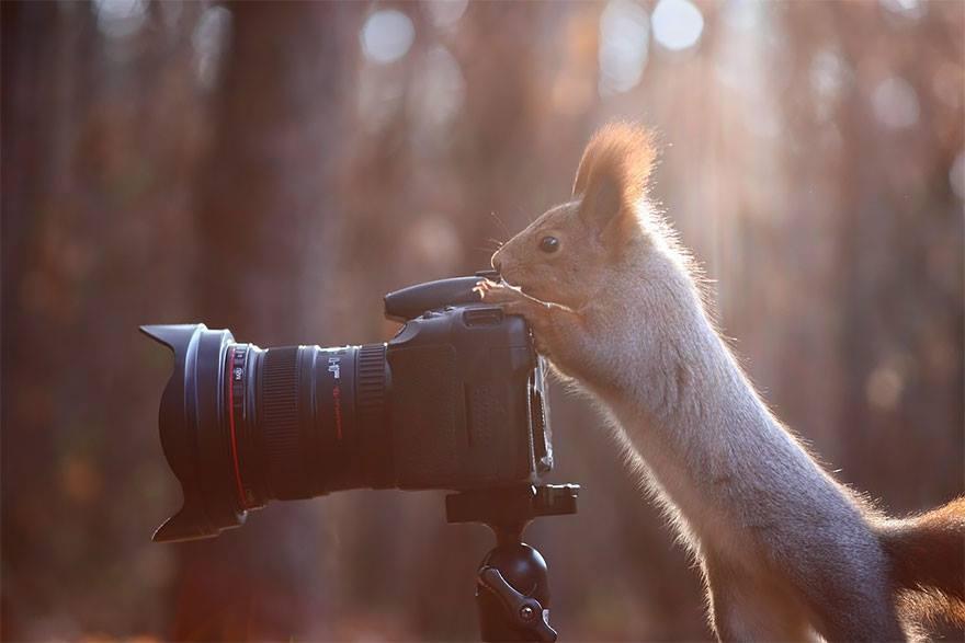 animales enamorados de la cámara ardilla