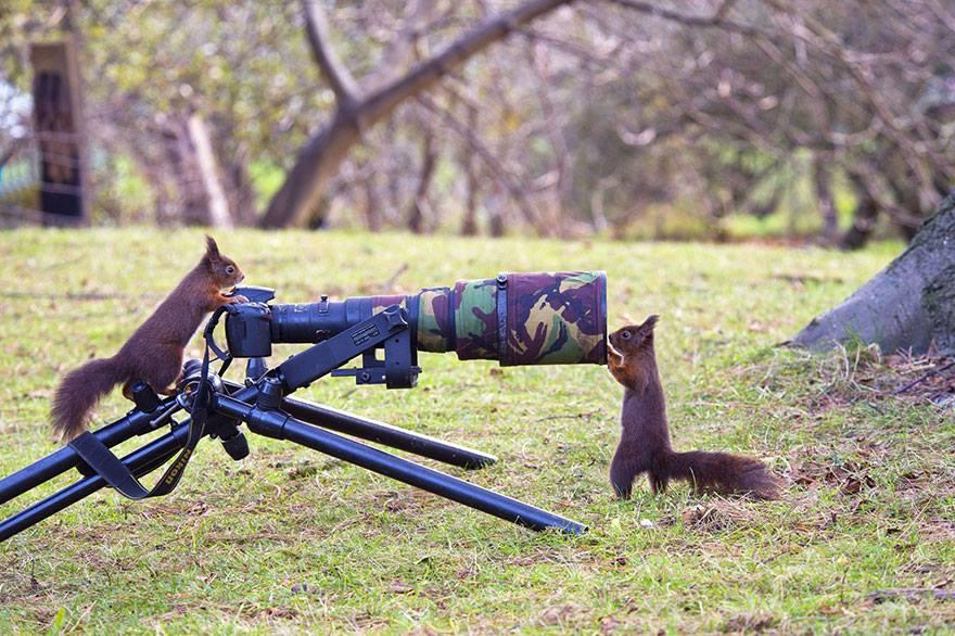 animales enamorados de la cámara ardillas