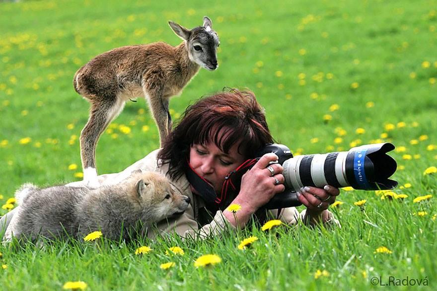 animales enamorados de la cámara ciervo