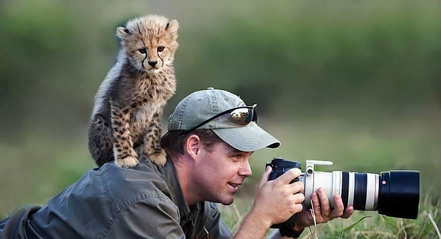 animales enamorados de la cámara cría guepardo