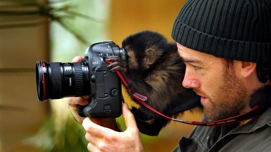 animales enamorados de la cámara mono objetivo