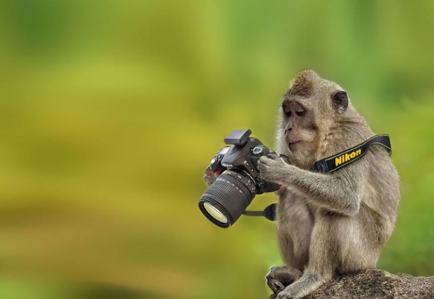 animales enamorados de la cámara mono