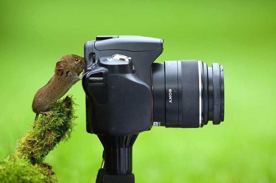 animales enamorados de la cámara ratón