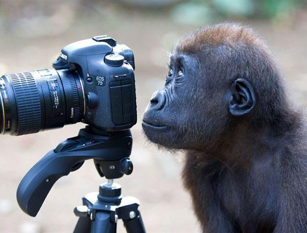 animales fotografos cámara mono