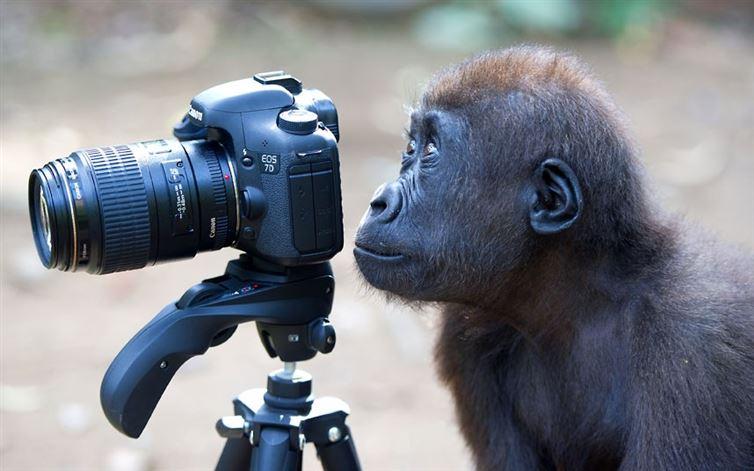 Animales enamorados de la cámara
