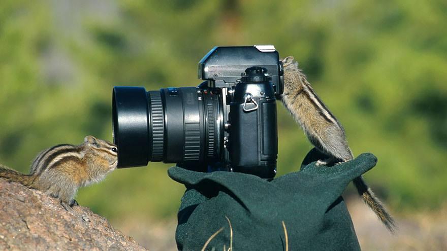 ardillas animales enamorados de la cámara