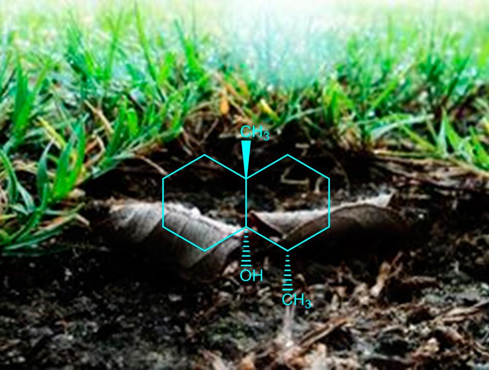 geosmina olor a tierra mojada