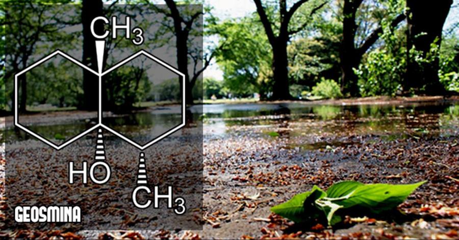 geosmina olor a tierra cuando llueve