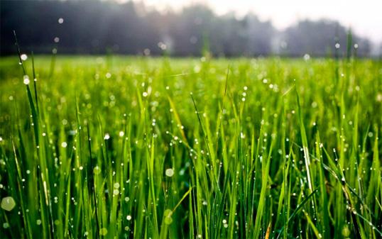 olor hierba mojada